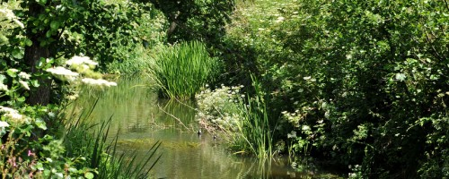 Tucking Mill Midford Brook nr Fishermen's Retreat and fly fishing