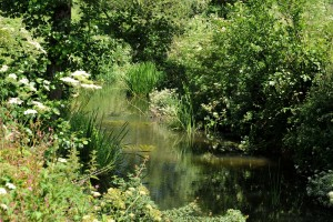 Midford Brook