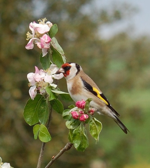 Bird perches on the flowers at Tucking Mill Self Catering Bath