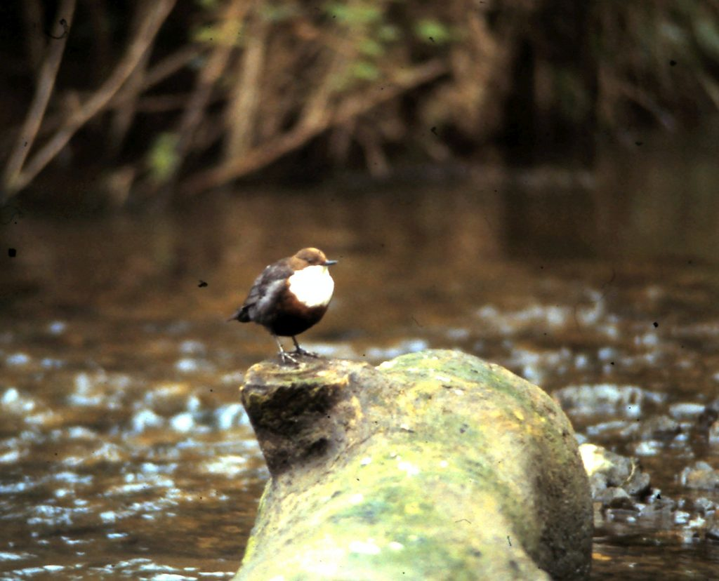 Bird perched on the Midford Brook at Tucking Mill Self Catering Bath