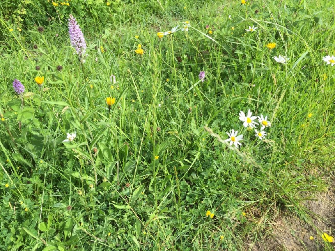 Rare Delights Discovered on Walk Around Tucking Mill…